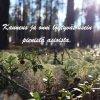 Puolukan varpuja, teksti Kauneus ja onni löytyvät usein pienistä asioista