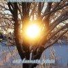 Aurinko ja puu, teksti Vaihtamalla näkökulmaa voit huomata jotain uutta ja ihmeellistä
